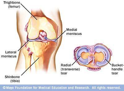 yoga anatomy meniscus link