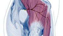 gluteusmed_tfl_yoga_anatomy_FI