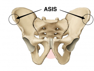asis yoga anatomy
