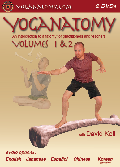 Yoga Anatomy Videos - DVD & Download - Yoganatomy.com