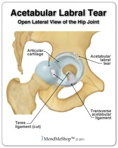 labrum yoga anatomy