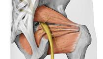 piriformis_sciatic_yoga_anatomy__FI