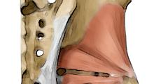 gluteus minimus muscle yoga anatomy