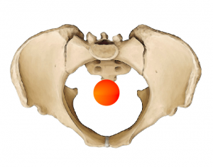 pelvis center of gravity