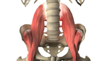 the basics of the psoas muscle and related issues, Human Body
