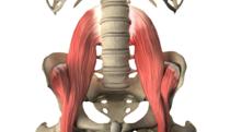 psoas_muscle_yoga_anatomy_FI
