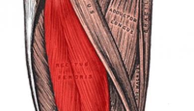 rectus femoris quadriceps gropu