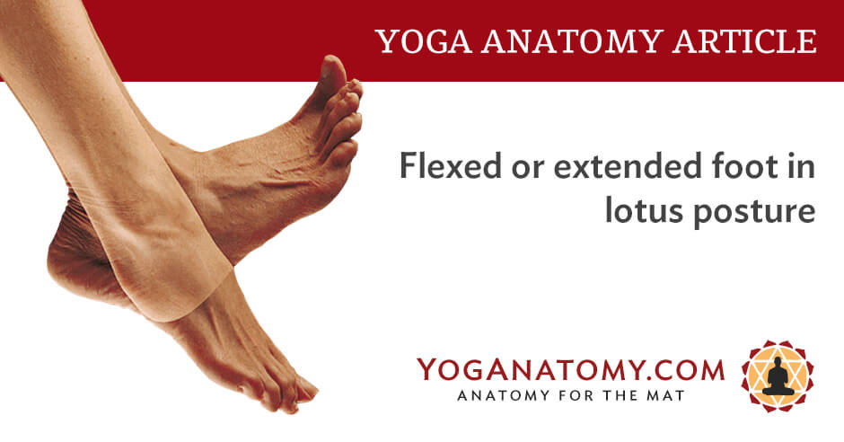 Foot Flexed Or Extended In Lotus Posture Yoga Anatomy