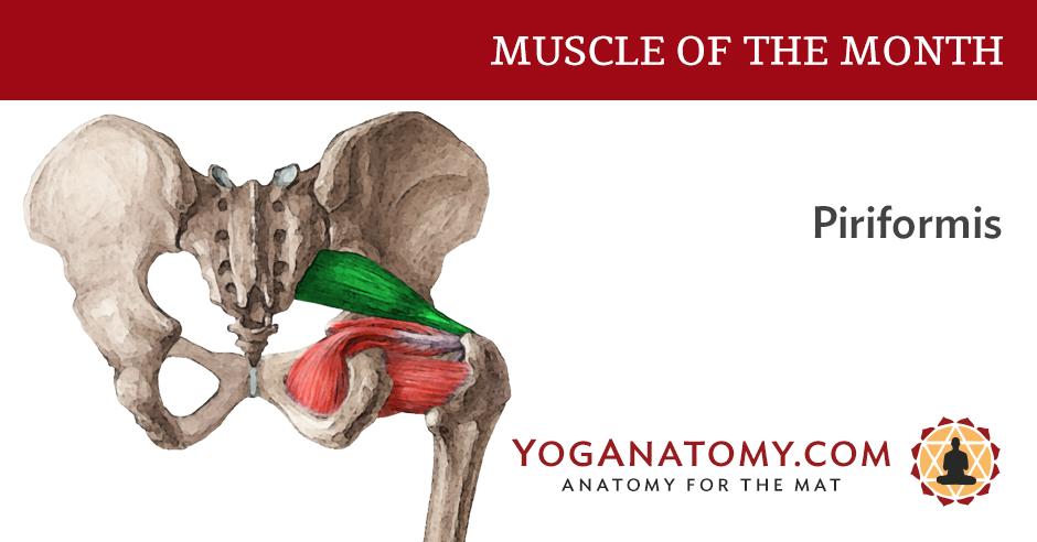 The Piriformis Muscle - Yoganatomy