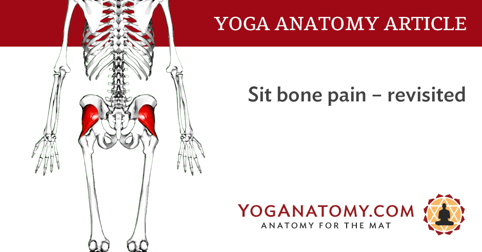Sit Bone Pain Has More Than One Cause Updated 2017 Yoga Anatomy