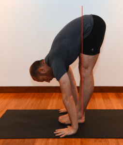 sun salutations forward fold