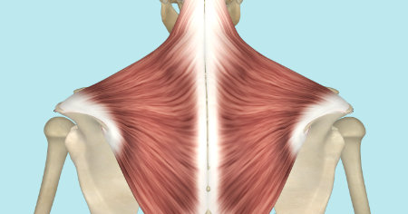 "Featured image for ""The Trapezius Muscle"""