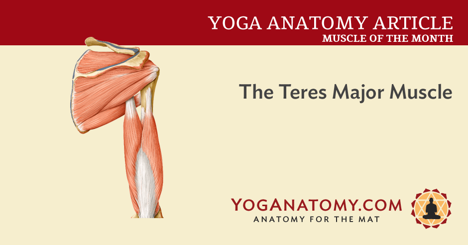 the teres major muscle - yoganatomy, Human body