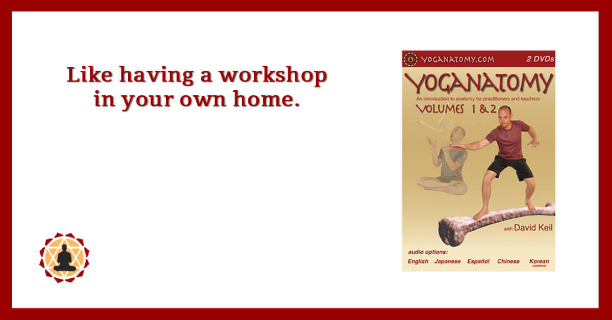 Yoga Anatomy Video - DVD & Download - Yoganatomy V1 & 2