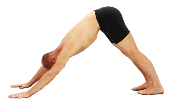 The Gastrocnemius Muscles in Downward Facing Dog