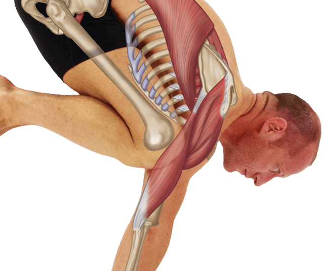 yoga-anatomy-book-bakasana