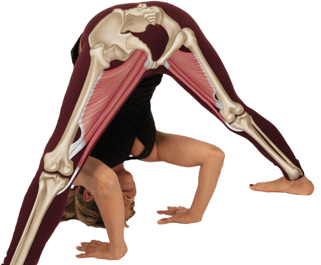 Yoga Anatomy Book - Functional Anatomy of Yoga by David Keil