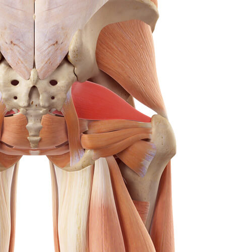 "Featured image for ""Deep Six Lateral Rotators"""