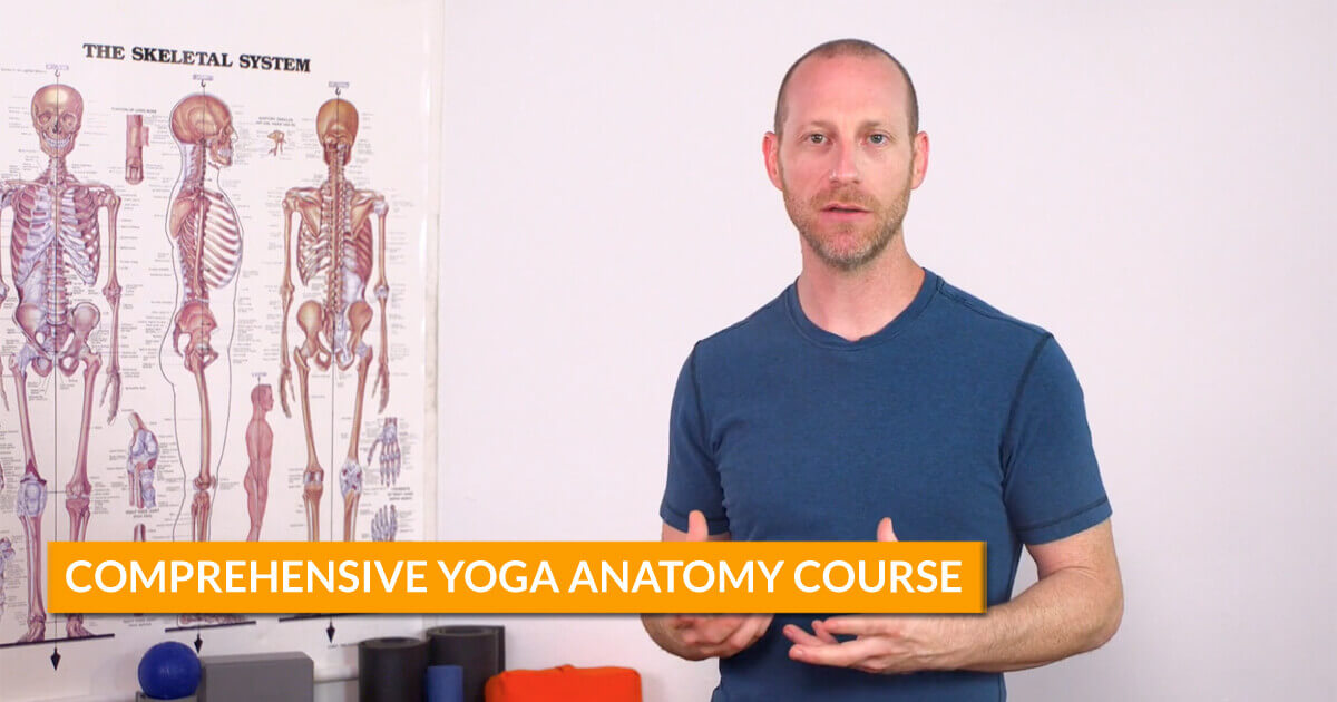 Online Comprehensive Yoga Anatomy Course