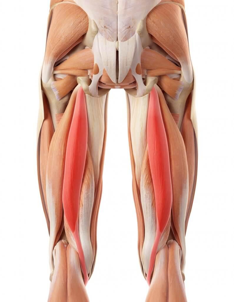 hamstring injury in forward bend