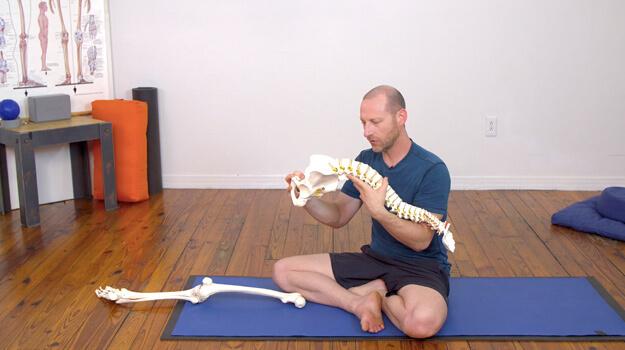 Yoga Anatomy Courses - Students,Teacher Training module