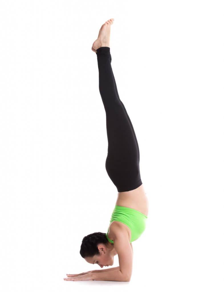 triceps brachii in pincha mayurasana