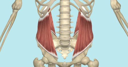 """Featured image for """"The Internal and External Oblique Muscles"""""""