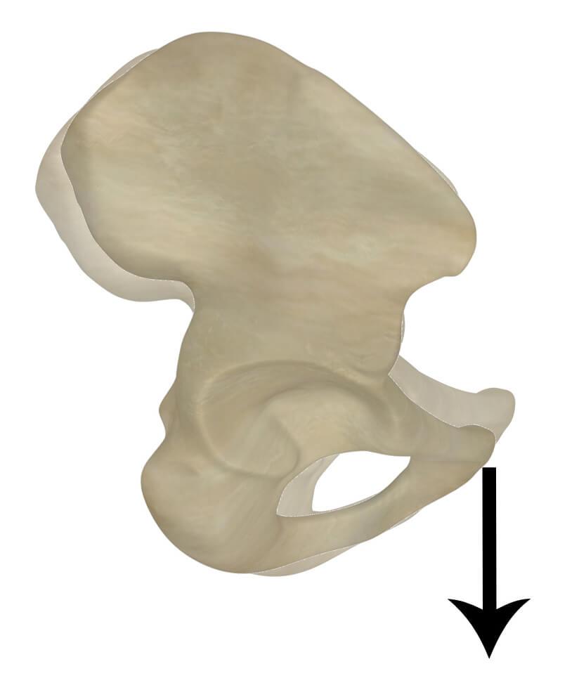 Anterior Tilt of Pelvis