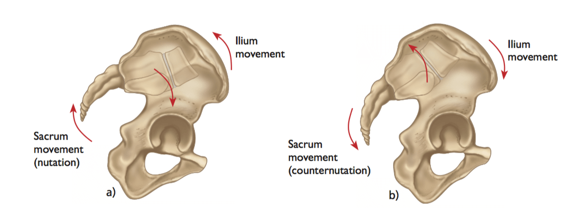 Movements of the SI Joint