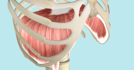 "Featured image for ""Diaphragm Muscle"""