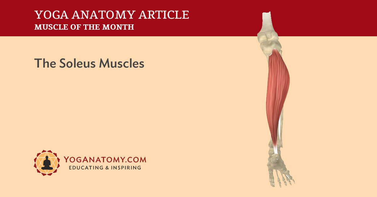 Soleus Muscles