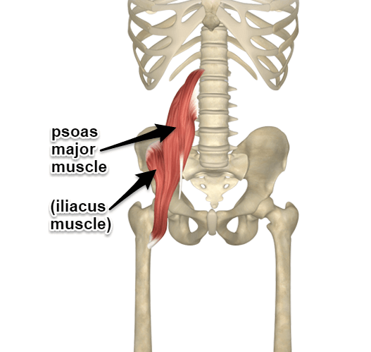 Psoas and Iliacus Muscle