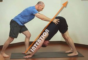 Adjusting Downward Dog - The Intention