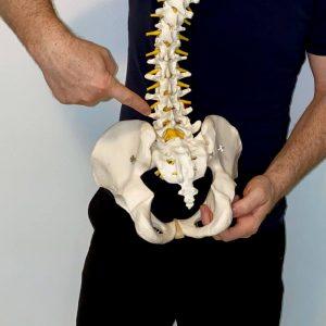 Lumbar And Sacrum Make Up The Low Back