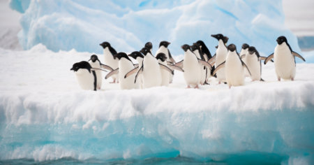 """Featured image for """"Can Yoga Help An Antarctic Expedition Team Manage Stress?"""""""